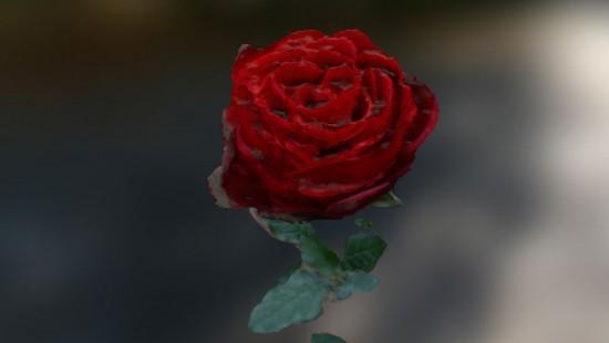Photogrammetrie - Rose